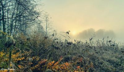 Осеннее настроение Утро озеро туман восход
