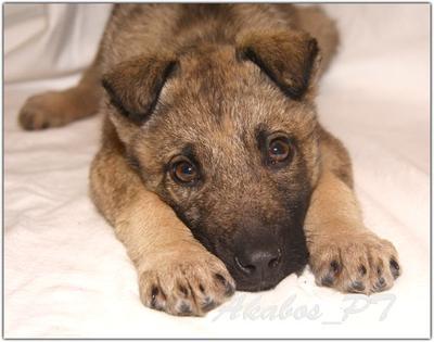 Возьми меня домой... собака, щенок, бездомные животные