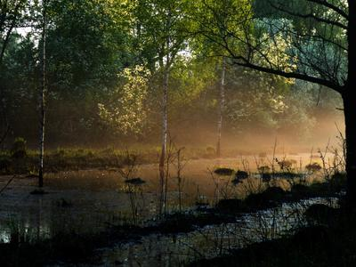 Новосибирск Новосибирск природа туман