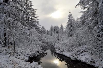Зимнее утро зима река деревья снег солнце мороз