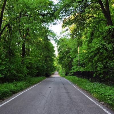 ***дорога в лесу