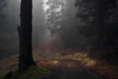уединение лес осень одиночество уединение пейзаж туман