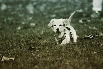 NEMO. Идёт охота на собак.
