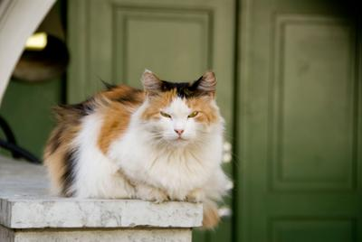 Эрмитажная кошка, 2011