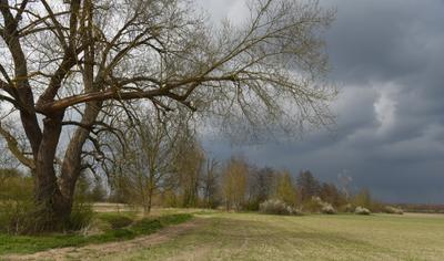 Пробуждение утро дерево весна поле