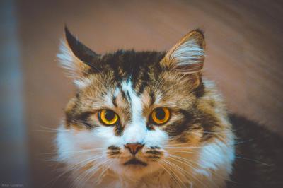 Котэ кот животные пуня