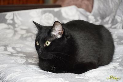 Кот Яша кот животное чёрный