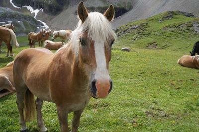 Альпийский луг и его обитатели