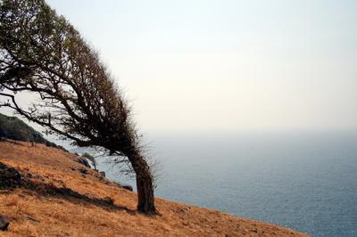Необитаемый остров Индия, остров