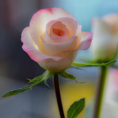 *** роза