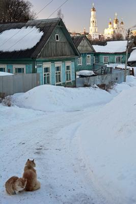 Переулок коты переулок