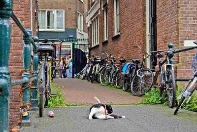 Amsterdam street life