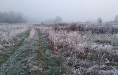 ** утро туман трава мороз лес..