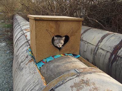 КОШКИН ДОМ кошка домик трубы