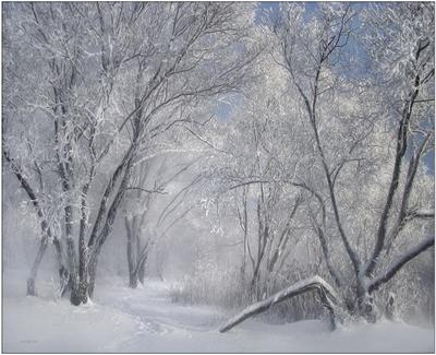emotions... природа снег мороз иней деревья зима