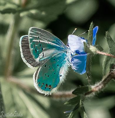 Май..Весна..Бабочка... май весна бабочка цветок