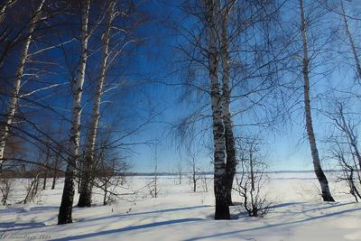 Берёзы пейзаж природа март лес