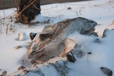 Снежный барсук снежный нанос фигура