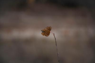 Последний лист осенний