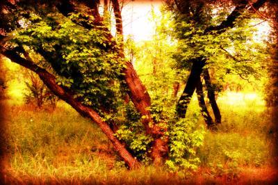 Tree дерево листья природа обработка