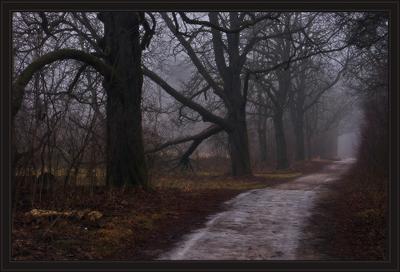 туманы ноября лес, дорога, туман, ноябрь