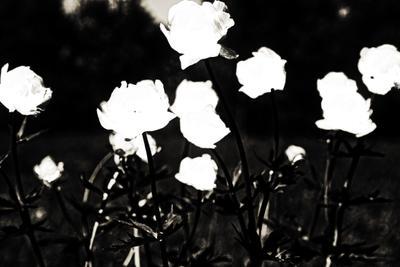 Цветы. Чёрный вариант