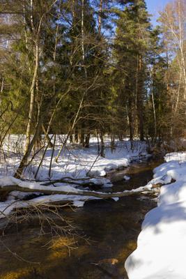 *** весна лес река солнце