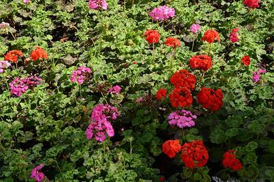 цветы цветы