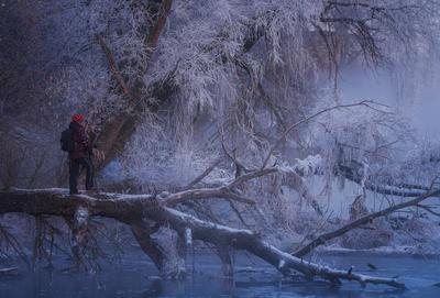 Ледяные джунгли утро зима рассвет пейзаж