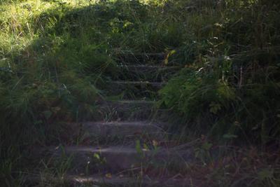 средь трав