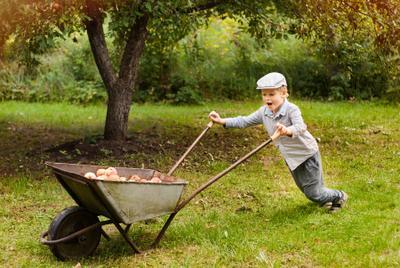 Яблоневый сад сентябрь детство