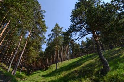 Лес природа пейзаж дес