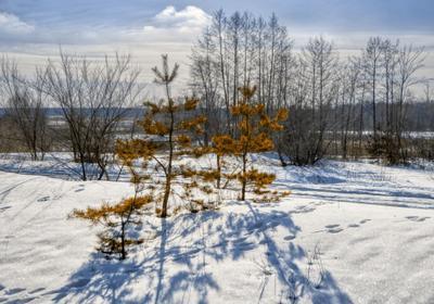 Излучающие свет пейзаж природа зима день снег тропинка лес сосны солнце Сомово