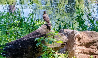 У пруда природа