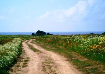 Дорога к морю... море жара июль радость