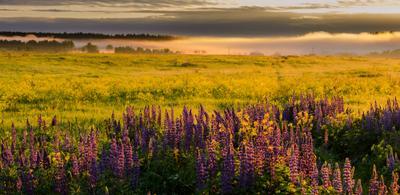 Туман-цветы-рассвет