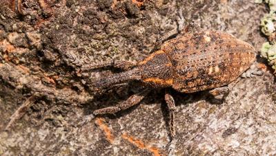 Маскировка жук лес насекомые