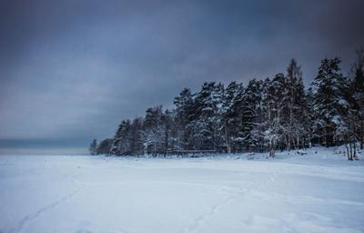 Перед темнотой финский залив море зима снег деревья лес берег облака хмуро сумерки репино