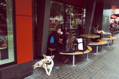 Белый пес длинные уши стрит, Москва