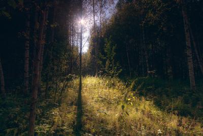 Солнечный свет в лесу лес деревья солнце