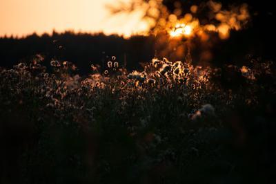 *** закат рассвет трава дерево природа солнце лес поле пух