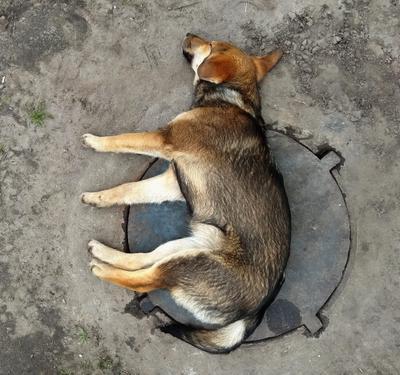 Собакатура круга))