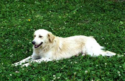 Хорошо на травке собака лето трава