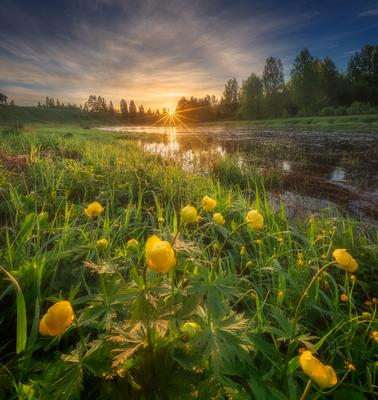 *** река восход весна цветы утро