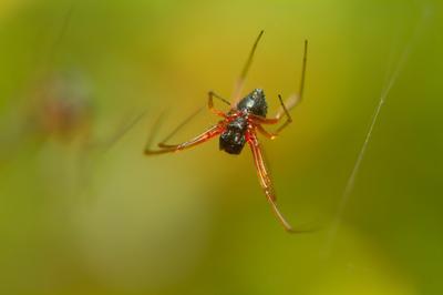 паук макро насекомые паук