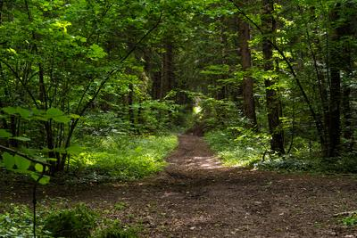 В лесу. лес деревья природа лето солнце