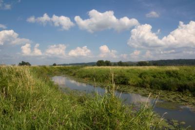 пойма Одра лето река небо природа трава цветы