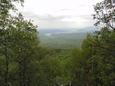 Таганай. таганай лес пасмурно дождь природа зелень растения деревья