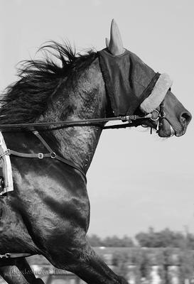 Пролетая мимо* ипподром цми рысак бега жеребец лошадь