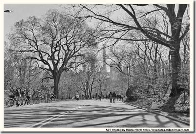 """Из серии """"Пространство теней"""" США Нью-Йорк Центральный Парк парк дерево деревья солнце свет тень тени прохожие велосипед велосипеды контраст Америка"""